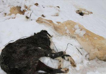 Konya'da 7 köpek, ayakları bağlı halde ölü bulundu