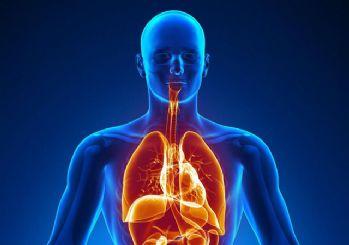 İnsan vücudunda işlevi kalmayan 10 organ ve kas!