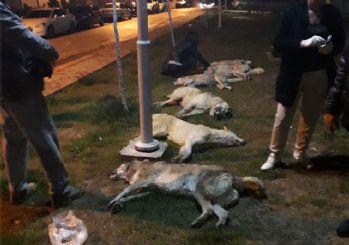 Ankara'daki köpek vahşetinden 1 kişi gözaltına alındı!