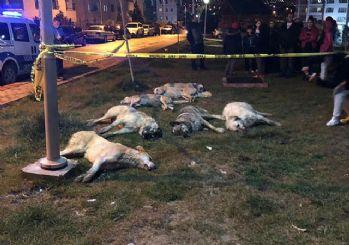 Ankara'daki köpek vahşetinde 'kiralık katil' iddiası