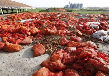 Ankara'da tonlarca çürümüş soğan atıldı!