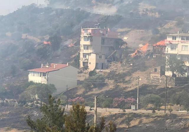 İzmir'de zeytinlik alanda yangın