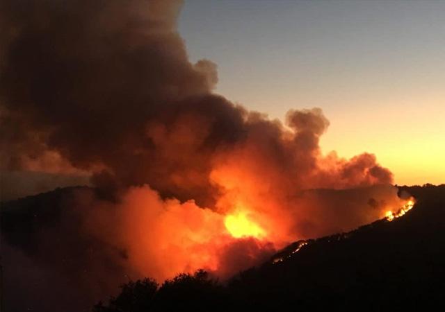 Karabağlar'daki yangın hakkında Bakan Pakdemirli'den açıklama