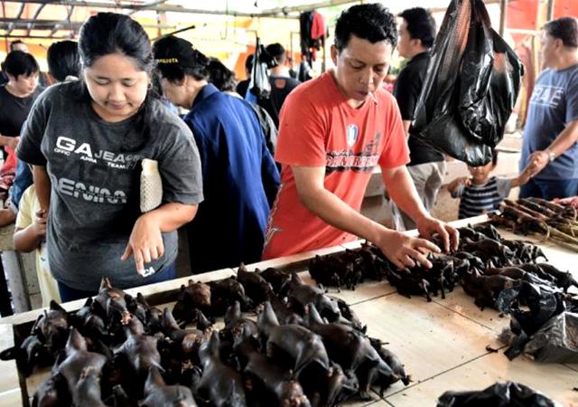 Çin'de virüsün çıktığı vahşi hayvan pazarları tekrar açıldı