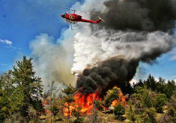 'Orman yangınlarının yüzde 80'i insanlardan kaynaklı'
