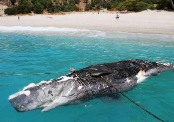 Muğla'da üç metre uzunluğunda ölü balina karaya vurdu