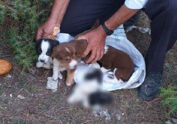 4 köpek yavrusunu çuvala koyup ormana bıraktılar
