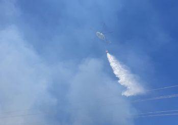 Burgazada'da orman yangını!
