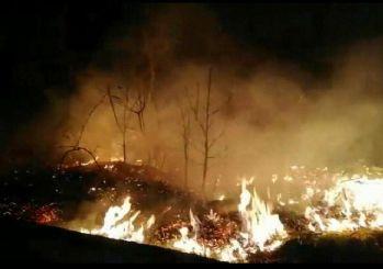 Karadeniz'in ciğerleri yanıyor! 5 yangından 38'i söndürüldü