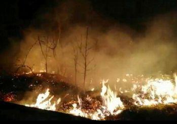 Karadeniz'deki orman yangınlarını terör örgütü PKK üstlendi