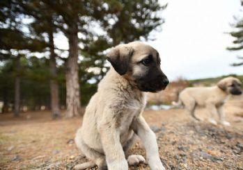 Hayvan haklarını korumayla ilgili yasa geliyor