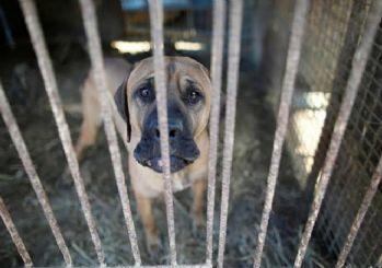Ocak ayı hayvan hakları raporu açıklandı: 47 işkence vakası meydana geldi