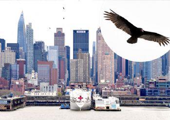 New York'ta ölümler arttı! Gözyüzünü akbabalar işgal etti