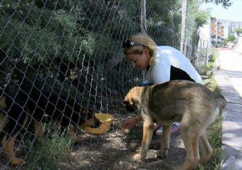 Sitede 'köpek besleme' kavgası: Kayısı, patates, soğan attılar