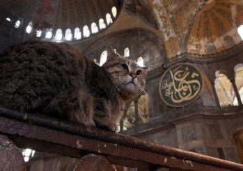 İstanbul Valisi Yerlikaya'dan Ayasofya'nın kedisi Gli'yle ilgili paylaşım