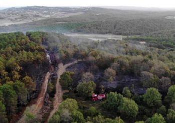 Pendik'te orman yangını