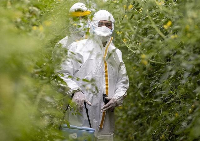 Tarım işçileri koronavirüs aşılarını tarlalarında oluyor