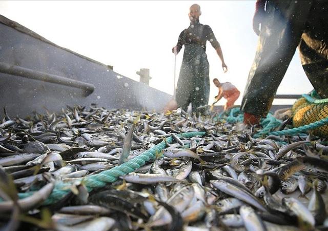 Av yasağı bitti! Balıkçılar denizle kavuştu