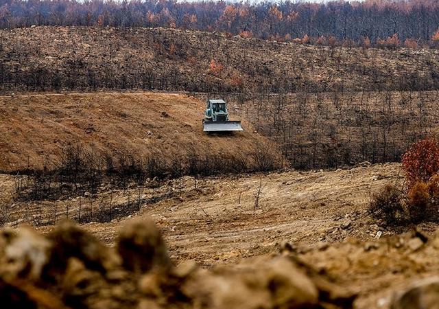 Ormanlar 100 milyon fidanla yeşillenecek