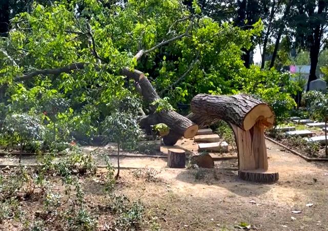Tepki çeken olay! Edirnekapı şehitliğinde asırlık ağaç kesildi