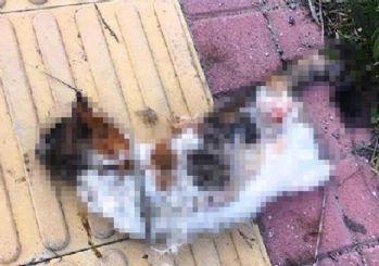 Bir kedi daha bacakları kesilerek öldürüldü