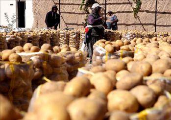 Tonlarca Patates ve soğan ücretsiz dağıtılacak