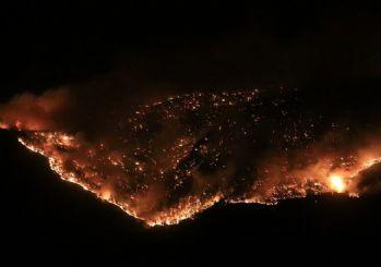 Türkiye'nin ormanları yanıyor