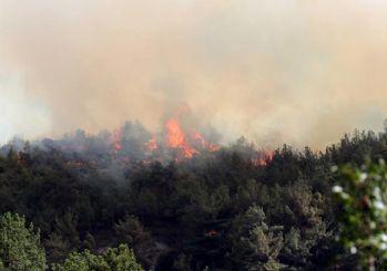 Aydın ve Karabük'te orman yangını çıktı