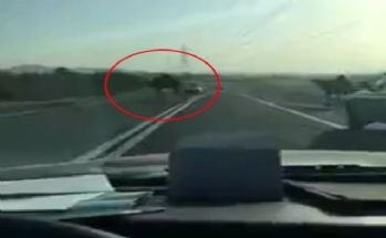 Yola deve çıkınca kaza da kaçınılmaz oldu