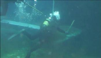 Akvaryumda köpek balığı dehşeti