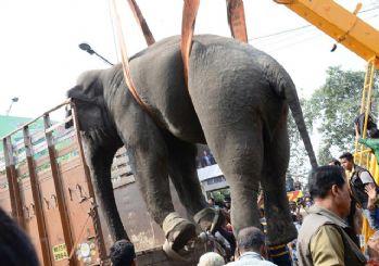 Hindistan'da Fil dehşeti