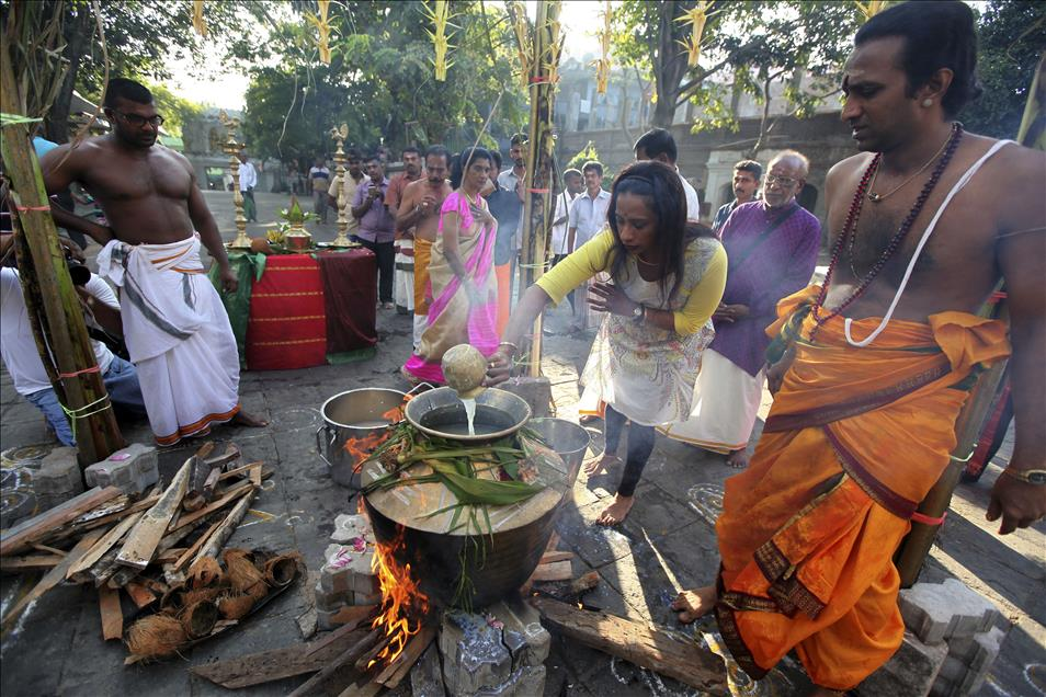 a research on the thai pongal festival in india