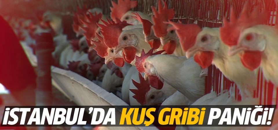 İstanbul'da kuş gribi paniği