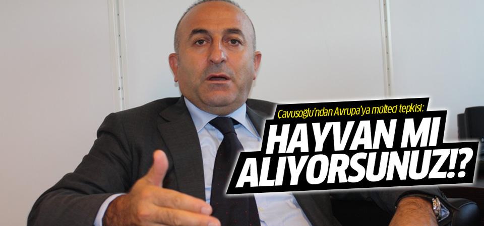 Mevlüt Çavuşoğlu'ndan mülteci tepkisi