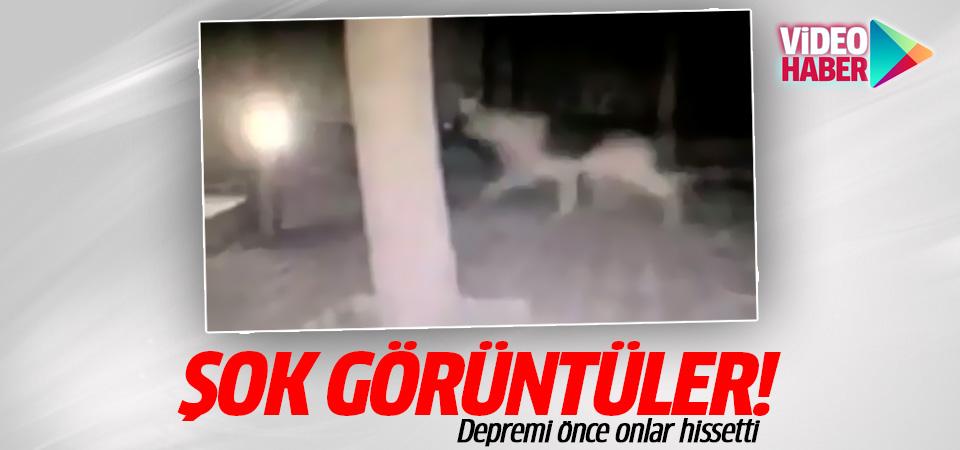 Bodrum'daki depremi önce onlar hissetti