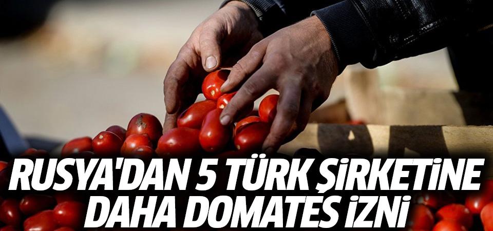 Rusya'dan 5 Türk şirketine daha domates izni
