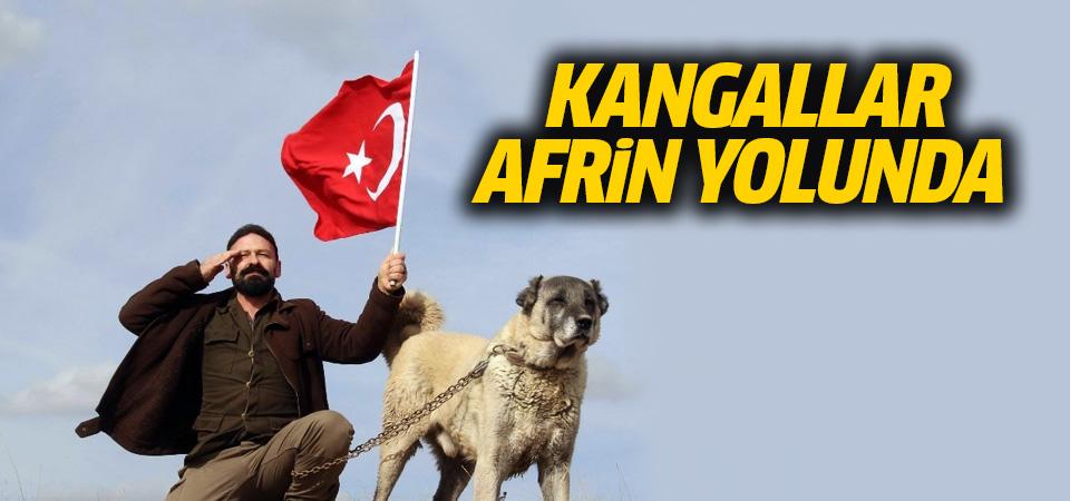Kangallar Afrin'e gidiyor