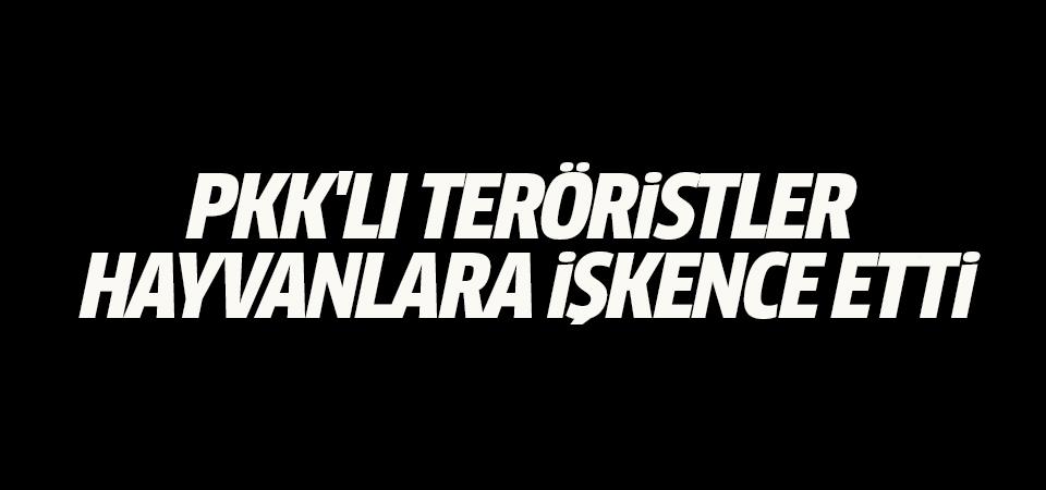 PKK'lı teröristler hayvanlara işkence etti
