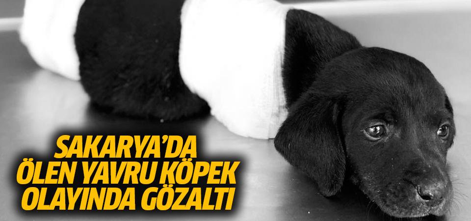Sakarya'da uzuvları kesilerek ölen yavru köpek olayında gözaltı