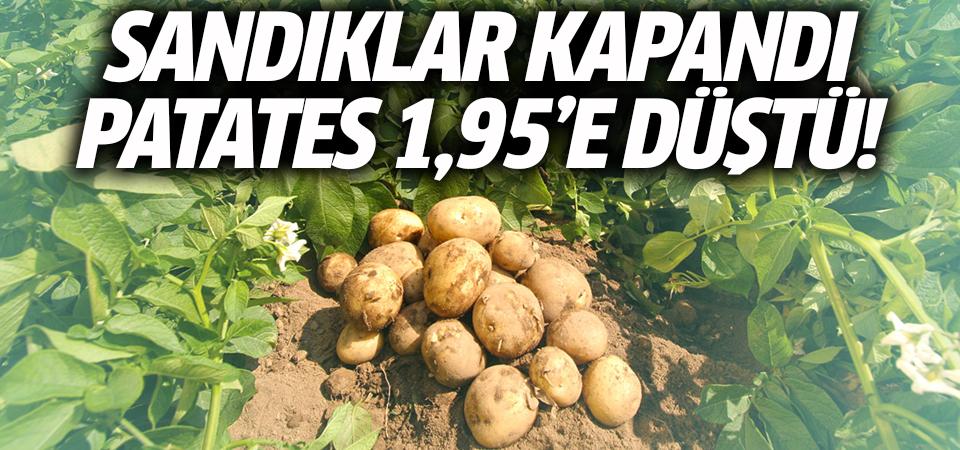 Sandıklar kapandı, patates 1.95'e düştü!