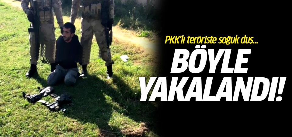 PKK'lı teröriste soğuk duş... Ağaç'ta yakalandı!