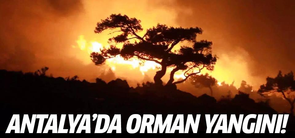 Antalya'da orman yangını! Ciğerlerimiz yanıyor