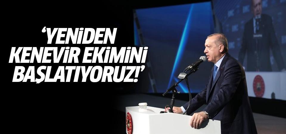 Erdoğan: Yeniden kenevir ekimini başlatıyoruz!