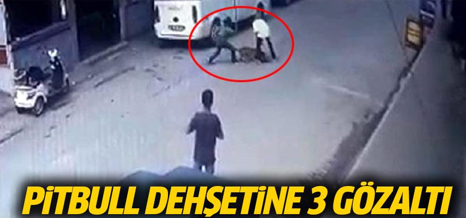 Adana'daki pitbull dehşetine 3 gözaltı