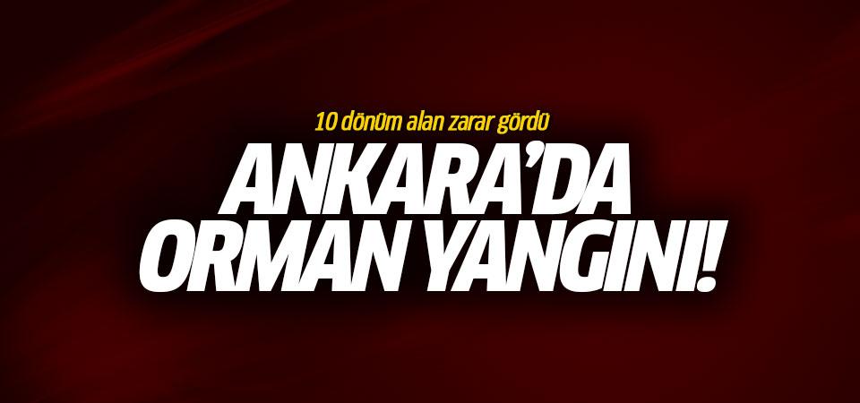 Ankara'da orman yangını!