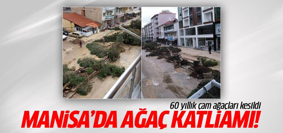 Manisa Kula'da ağaç katliamı!