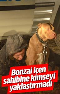Bonzai içen sahibinin yanına kimseyi yaklaştırmadı!